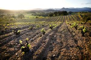 Costa Brava wine Route